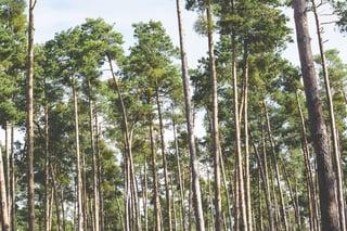 Environmental Benefis